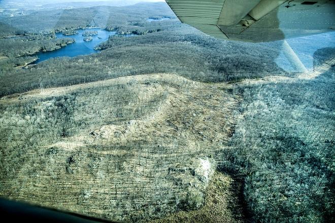 Edison Bog North seed tree cut